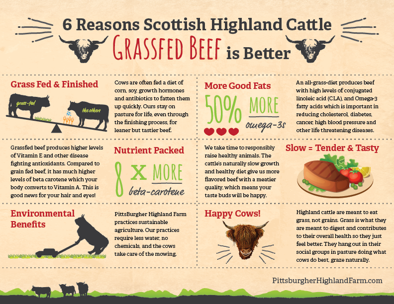 grass fed beef graphic
